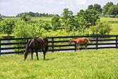 égua e o potro — Foto Stock