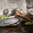 Turtles on Logs — Stock Photo