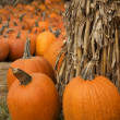 Pumpkin Patch — Stock Photo #22653007