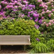 Bench and Rhododendron — Stock Photo