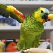 amazon parrot — Stock Photo