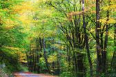 Dirt Road in Autumn — Stock Photo