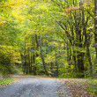 Gravel Trail in Autumn - Stock Photo
