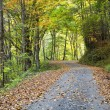 Stock Photo: Country Dirt Road