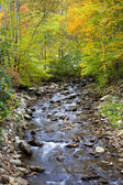 Stream in the Fall — Stock Photo
