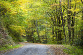 Gravel Trail in Autumn — Stock Photo