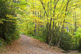 Mountain Road in the Fall — Stock Photo