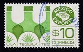 Mexico exporta tequila — Stock Photo