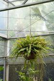 Pendaison de plante en pot vert. — Photo