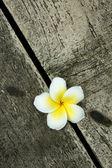 Beautiful frangipani in Children's hands — Stock Photo