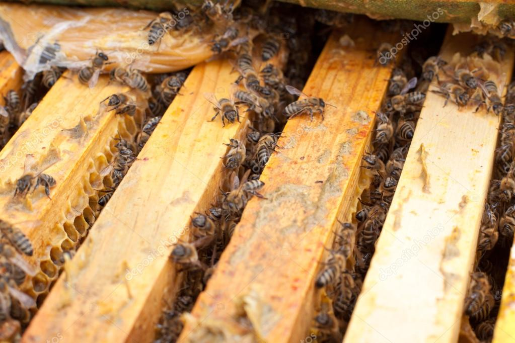 Bees on honeycomb.  Late autumn shot. — Stock Photo #13748421