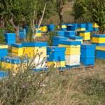 Beehive — Stock Photo #15818979