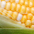 Bi Color Sweet Corn and Husk — Stock Photo