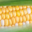 Sweet Corn on the Cob — Stock Photo