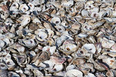 Oyster Shell Pile — Stock Photo