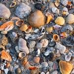 Seashells on Sandy Beach — Stock Photo #31479829