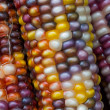 Variegated Indian Corn — Stock Photo