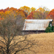 Autumn Barn and Tree in Cornfield — Stock Photo #34811445