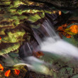 Cascading Autumn Brook — Stock Photo