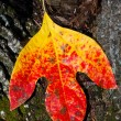 Red and Yellow Leaf — Stock Photo #35351143