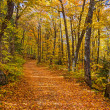 Fall in Michigan Woods — Stock Photo
