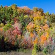Stock Photo: Vibrant Autumn Hillside