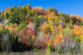 Vibrant Autumn Hillside — Stock Photo