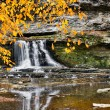 Waterfall and Golden Leaves — Stock Photo #41537615