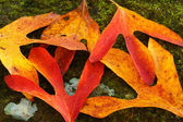 Autumn Leaves on Mossy Rock — Stock Photo