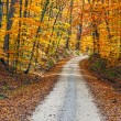 Stock Photo: Country Road and Fall Colors