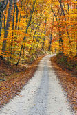 Country Road and Fall Colors — Stock Photo