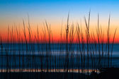 Dune Grass Dawn — Stock Photo