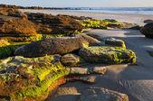 Beach Rocks at Daybreak — Stock Photo