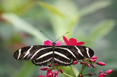 Butterfly in nature - Spring is here — 图库照片