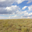 View of steppe — Stock Photo