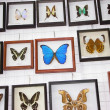 Stock Photo: Butterfly collection