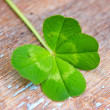 Four leafs clover  — Stock Photo