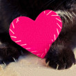 Cat with pink heart — Stock Photo