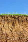 Soil cross section — Stock Photo