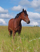 Portrait of young horse on pasture — Stock Photo