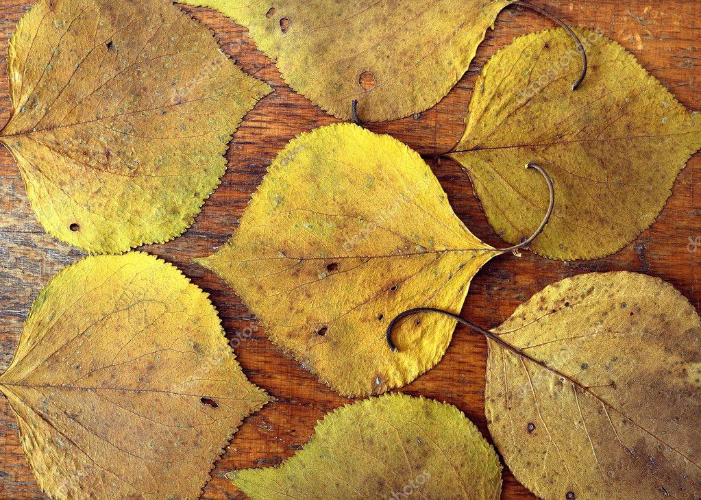 色的树叶花束 soyka564  天的树叶   - 图库图片 购物车 购物车 灯箱