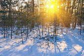 Floresta de inverno noite — Fotografia Stock
