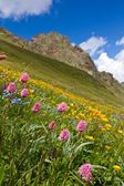 Mountain slope in a flowers — Stock fotografie