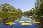 Summer river landscape — Stock Photo
