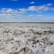 Stock Photo: Saline land panorama