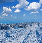Winter forest by a bright day — Stock Photo