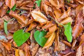 Dry autumn leaves background — Foto de Stock