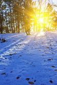 Winter forest in a rays of sun — Stock Photo