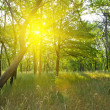 Green morning forest — Stock Photo