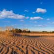 Sandy desert panorama — Stock Photo